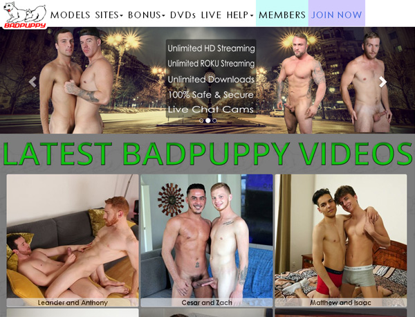 Badpuppy Become A Member